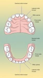 млечни зъби